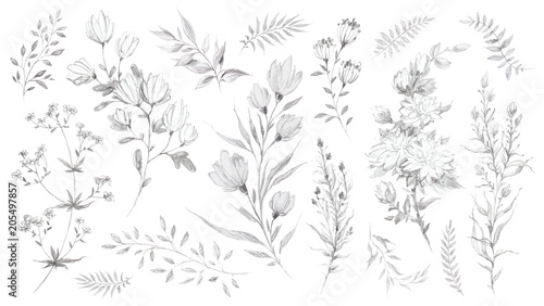 Canvas Print Wild flowers and herbs pencil sketch