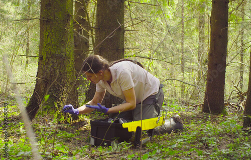 Carta da parati Woman scientist ecologist in the forest taking samples of the moss with tweezers