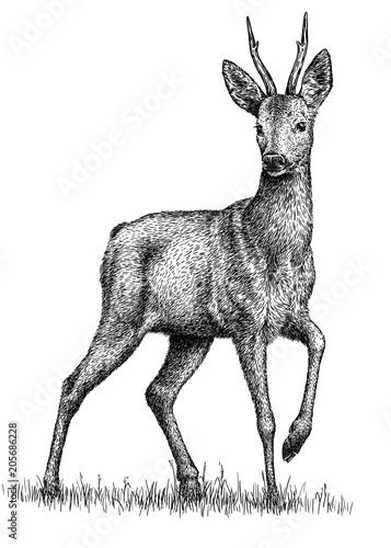 Photo black and white engrave isolated deer illustration