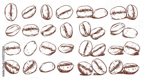 Fotografia Coffee beans, sketch, vector drawing set, Ingredient, Doodle design