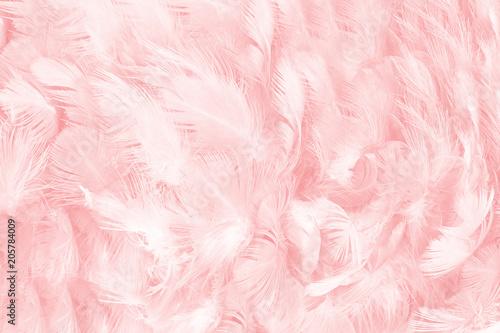Naklejka premium miękki różowy kolor vintage trendy kurczak pióro tekstura tło