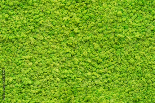 Canvas Print seamless close up green moss texture