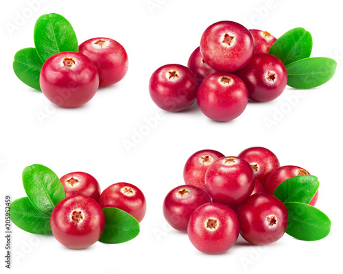 cranberries collection isolated