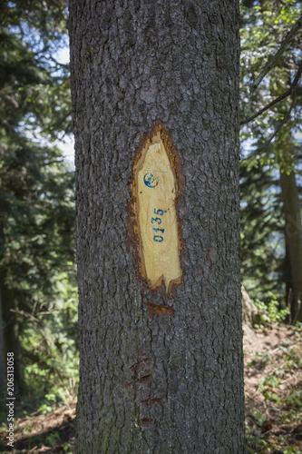 wycinanie ozdób na gałęzi-wycieczka w góry