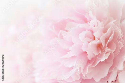 Carta da parati beautiful pink peony flower background