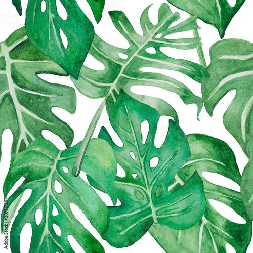 Fototapeta Liście malowane akwarelą monstera zielona