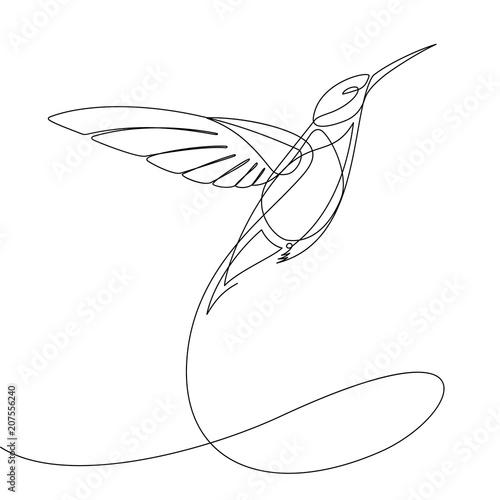 Fotografia Humming Bird Continuous Line Vector