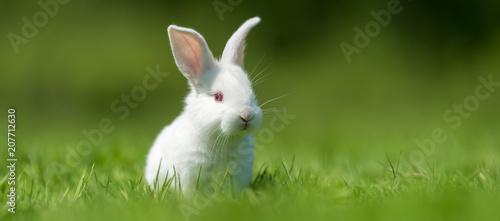 Foto Baby white rabbit in grass