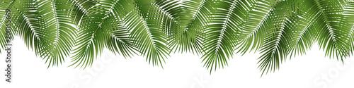 Vector seamless summer palm leaves on white background. Fototapeta