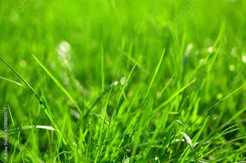 Poranna rosa na jasno zielonej trawie tuz o świcie.