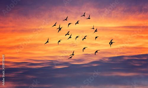 Valokuva birds flying into sunset sky