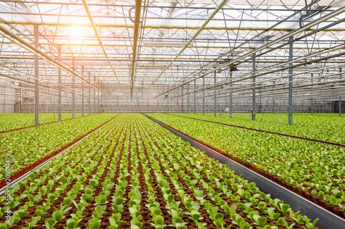 Valokuvatapetti Industrial greenhouse cultivation.