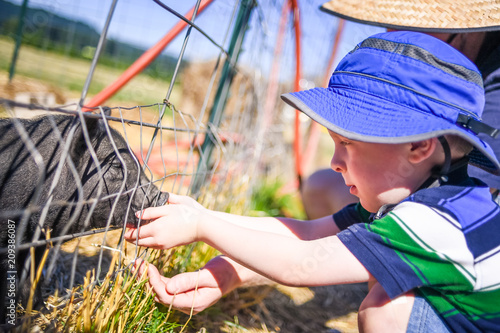 Photo Young boy concentrates as he feeds a little black pig with his father on a brigh