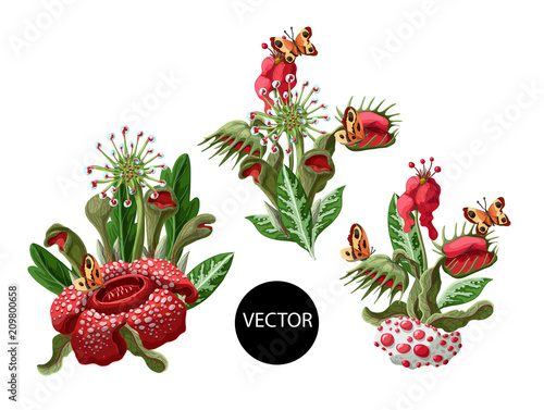 Stampa su Tela Plant predators such as Venus flycatcher, sundew and others