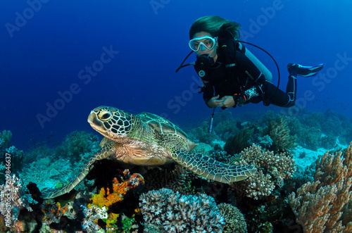 Canvas Print Turtle and girl