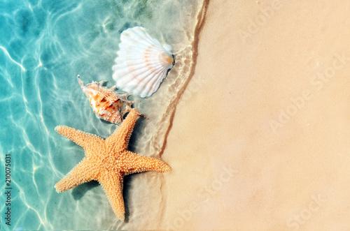 Tela starfish and seashell on the summer beach in sea water.