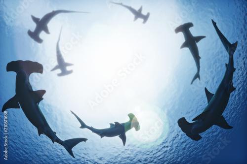 Fototapeta premium Szkoła rekinów młotów krążących z głębin oceanu. Renderowanie 3d