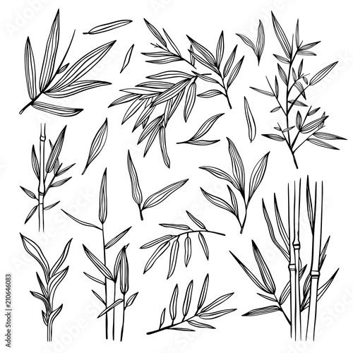 Bamboo black outline illustrations Fototapeta