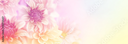 Valokuva soft romance dahlia flower in sweet pastel tone background for valentine and wed
