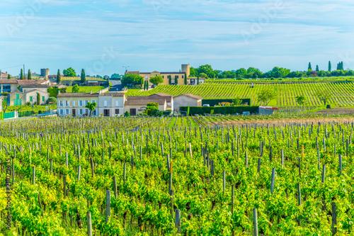 Photographie Vineyards at Saint Emilion, France