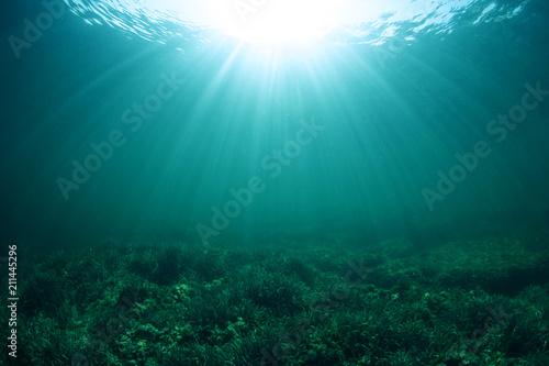 Canvas Print Under the sea