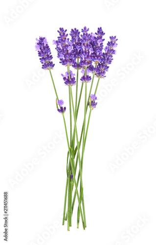 Fototapeta premium Kwiaty lawendy na białym tle.