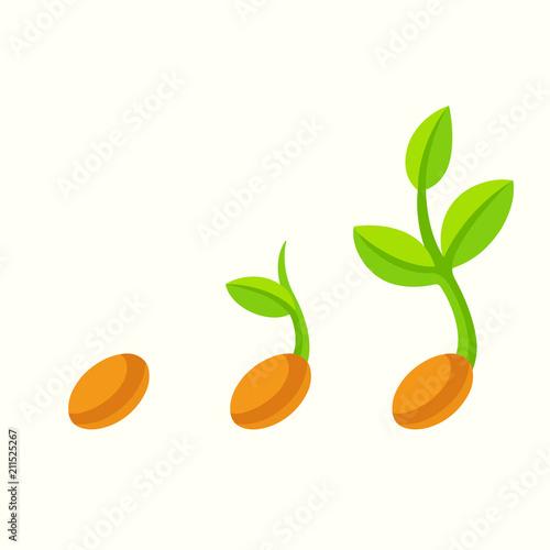 Fototapeta Sprouting seed illustration