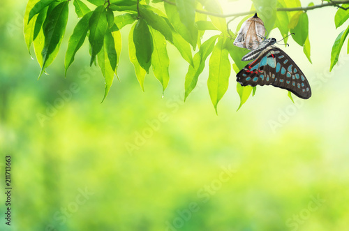 Leinwand Poster Butterfly change Chrysalis