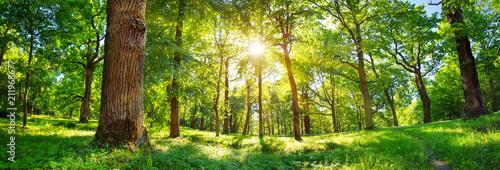 Fototapeta premium stare liście dębu w świetle poranka z promieni słonecznych