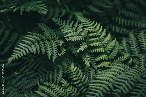 Obraz na plátně Natural green fern wallpaper