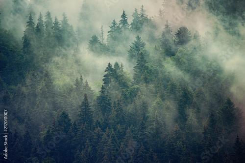 Naklejki na meble Mglisty krajobraz jodłowego lasu w stylu vintage