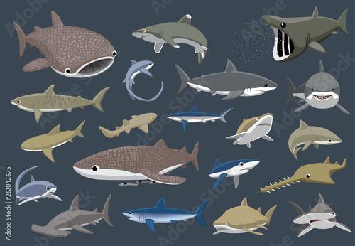 Fototapeta premium Różne rekiny zestaw ilustracji wektorowych kreskówki