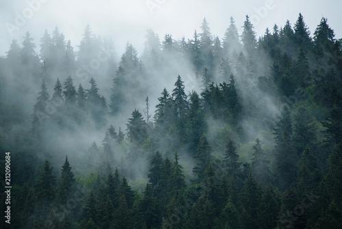 Fototapeta wierzchołki drzew we mgle