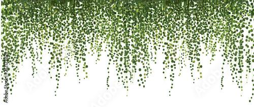 Fotografia climbing wall of ivy