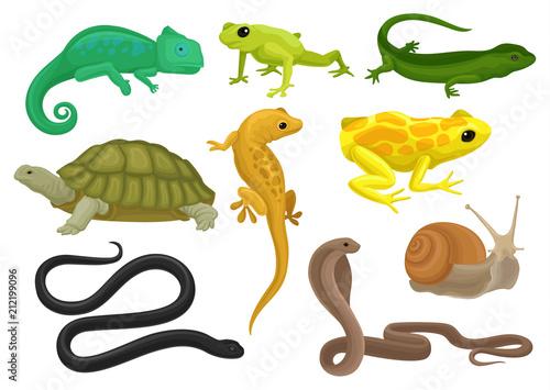Reptile and amphibian set, chameleon, frog, turtle, lizard,gecko, triton vector Fototapeta
