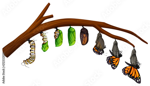 Foto A Set of Butterfly Life Cycle