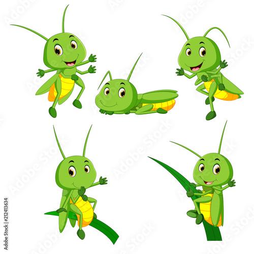 Carta da parati set collection grasshopper cartoon
