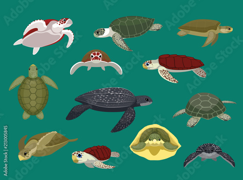 Fototapeta premium Różne żółw morski stwarza ilustracji wektorowych