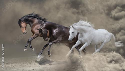 Fotografia Bay, black and white horses runs in the dust storm