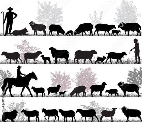 Fototapeta premium Sylwetki owiec, baranów i jagniąt na zewnątrz