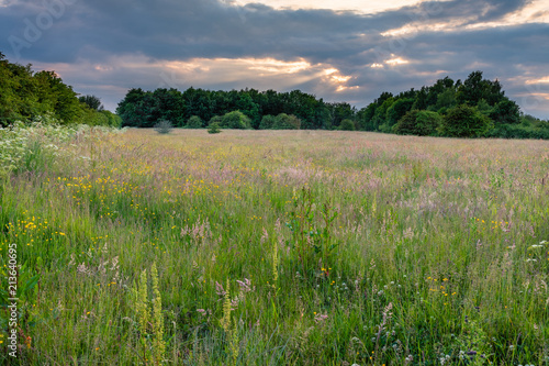 Wild Meadow at Big Waters Nature Reserve / Big Waters Nature Reserve located in Fototapeta