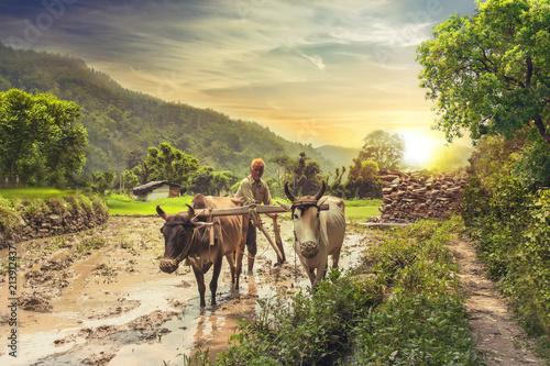 Canvas Print Farmer ploughing rice field at sunrise