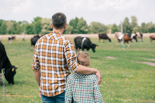 Fotografia back view of father and son standing together and looking at cows grazing on far