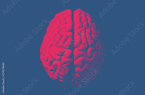 Valokuvatapetti Monochrome drawing brain vintage style