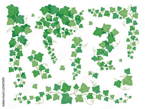 Stampa su Tela Ivy green leaves