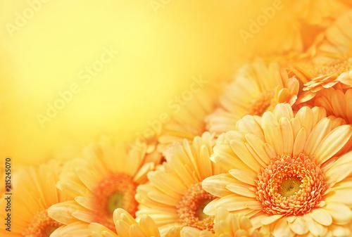 Obraz na plátně Summer/autumn blossoming gerbera flowers on orange background, bright floral car