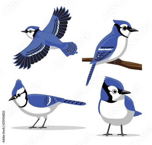 Canvas Print Cute Blue Jay Poses Cartoon Vector Illustration
