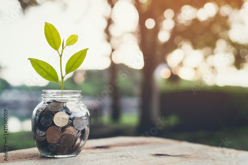 Carta da parati Plant on pile coins in the bottle, Money growing concept and the goal success