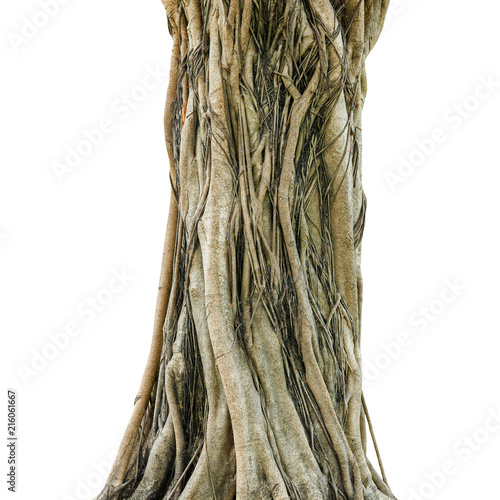 Canvas Print Tree trunk isolated on white background. This has clipping path.