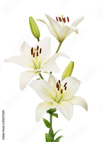 Fotografia lily flower